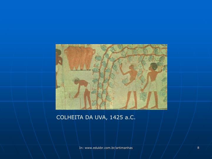 COLHEITA DA UVA, 1425 a.C.