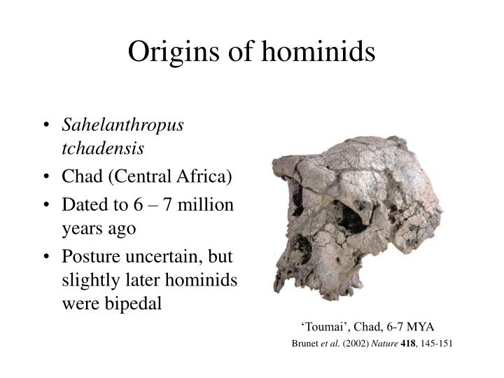 Origins of hominids