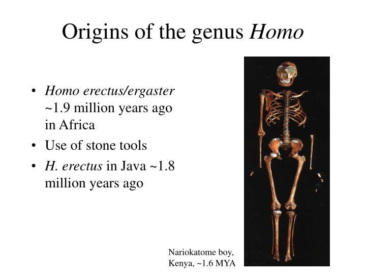 Origins of the genus