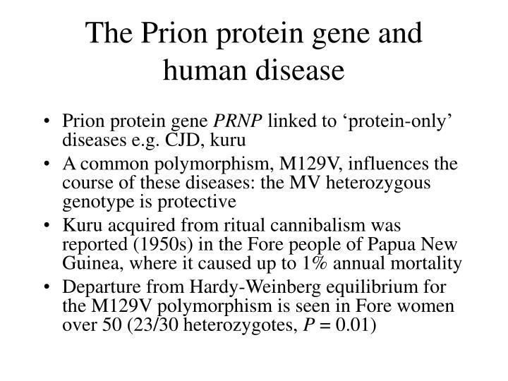 The Prion protein gene and human disease