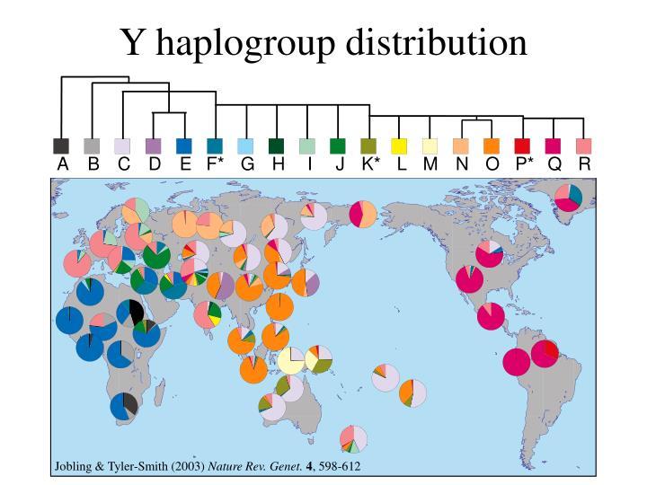 Y haplogroup distribution