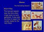 shemu the harvesting season