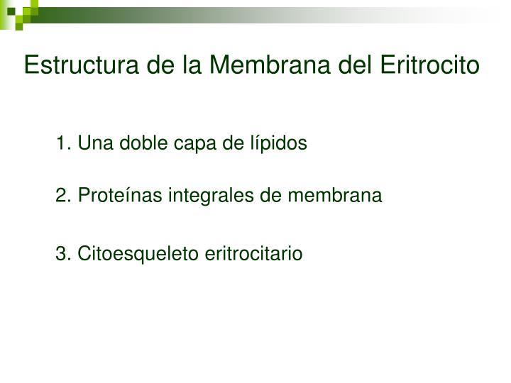 Estructura de la Membrana del Eritrocito