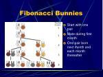 fibonacci bunnies