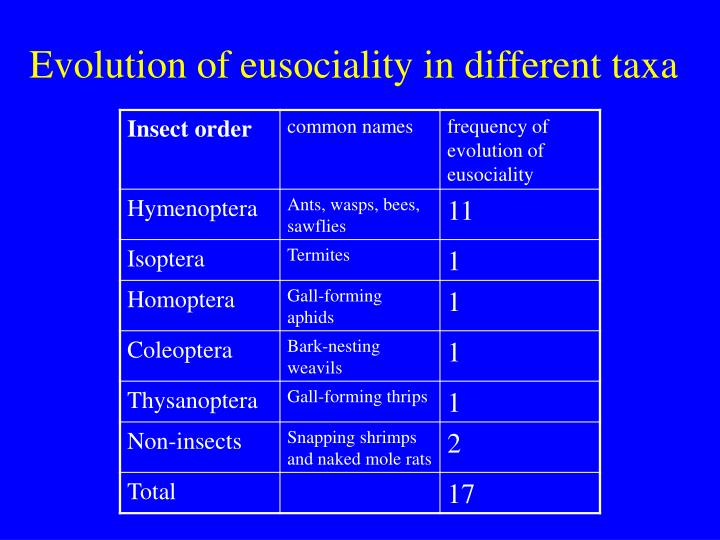 Evolution of eusociality in different taxa