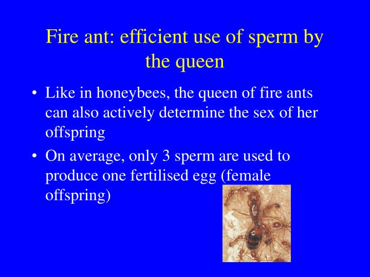 Fire ant: efficient use of sperm by the queen