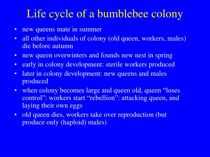 Life cycle of a bumblebee colony