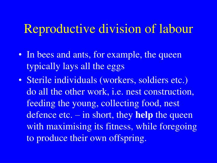 Reproductive division of labour