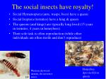 the social insects have royalty