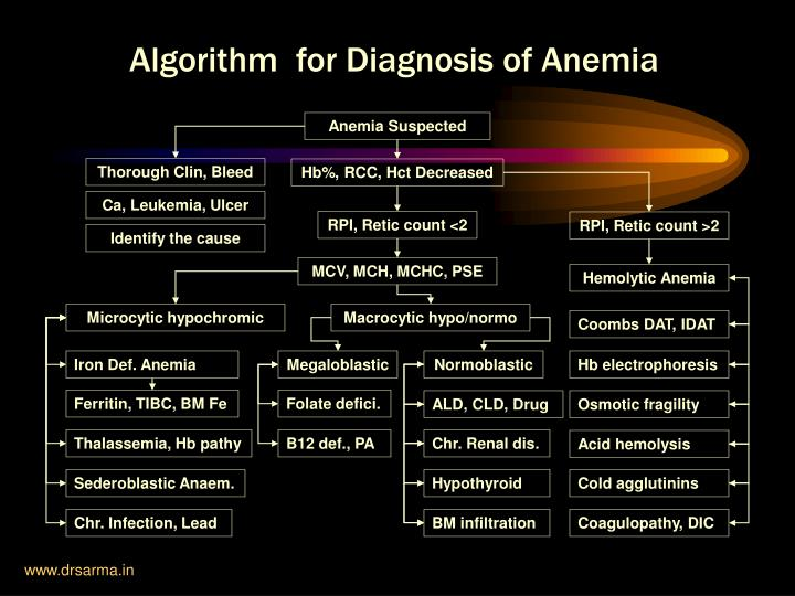Algorithm  for Diagnosis of Anemia
