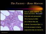 the factory bone marrow