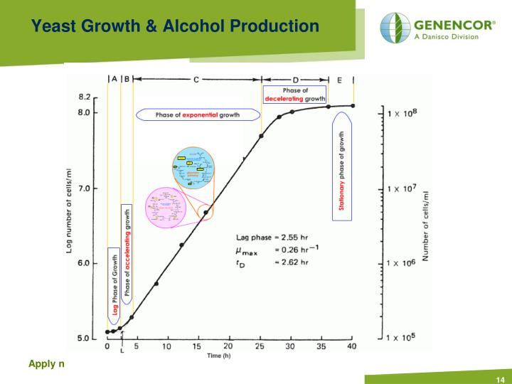 Yeast Growth & Alcohol Production