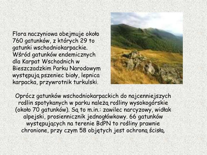 Flora naczyniowa obejmuje okoo 760 gatunkw, z ktrych 29 to gatunki wschodniokarpackie. Wrd gatunkw endemicznych dla Karpat Wschodnich w Bieszczadzkim Parku Narodowym wystpuj pszeniec biay, lepnica karpacka, przywrotnik turkulski.