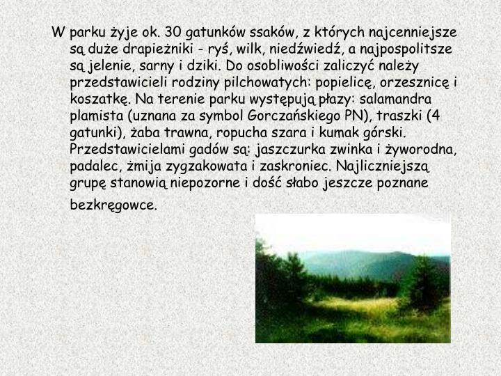 W parku yje ok. 30 gatunkw ssakw, z ktrych najcenniejsze s due drapieniki - ry, wilk, niedwied, a najpospolitsze s jelenie, sarny i dziki. Do osobliwoci zaliczy naley przedstawicieli rodziny pilchowatych: popielic, orzesznic i koszatk. Na terenie parku wystpuj pazy: salamandra plamista (uznana za symbol Gorczaskiego PN), traszki (4 gatunki), aba trawna, ropucha szara i kumak grski. Przedstawicielami gadw s: jaszczurka zwinka i yworodna, padalec, mija zygzakowata i zaskroniec. Najliczniejsz grup stanowi niepozorne i do sabo jeszcze poznane bezkrgowce.