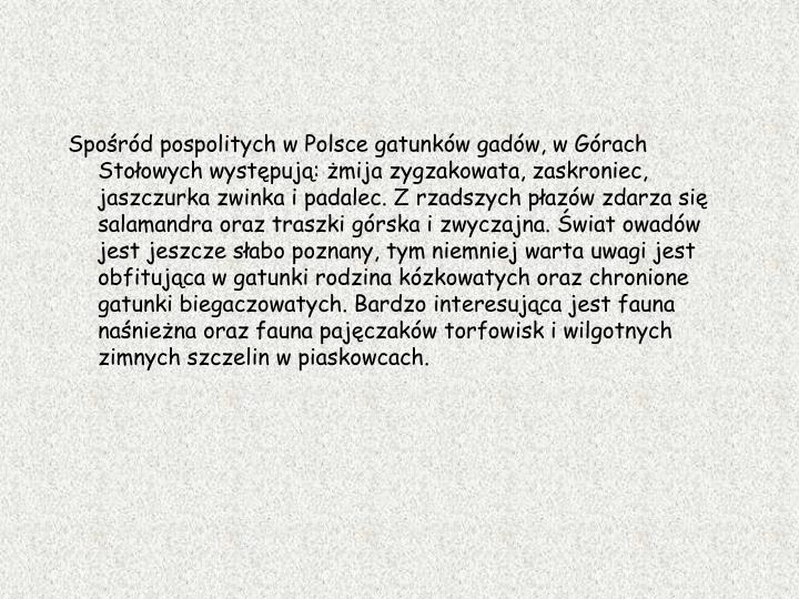 Spośród pospolitych w Polsce gatunków gadów, w Górach Stołowych występują: żmija zygzakowata, zaskroniec, jaszczurka zwinka i padalec. Z rzadszych płazów zdarza się salamandra oraz traszki górska i zwyczajna. Świat owadów jest jeszcze słabo poznany, tym niemniej warta uwagi jest obfitująca w gatunki rodzina kózkowatych oraz chronione gatunki biegaczowatych. Bardzo interesująca jest fauna naśnieżna oraz fauna pajęczaków torfowisk i wilgotnych zimnych szczelin w piaskowcach.