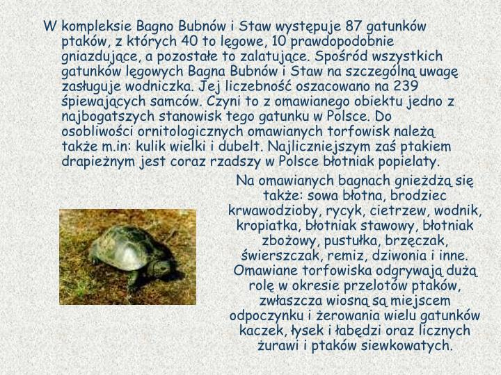 W kompleksie Bagno Bubnw i Staw wystpuje 87 gatunkw ptakw, z ktrych 40 to lgowe, 10 prawdopodobnie gniazdujce, a pozostae to zalatujce. Spord wszystkich gatunkw lgowych Bagna Bubnw i Staw na szczegln uwag zasuguje wodniczka. Jej liczebno oszacowano na 239 piewajcych samcw. Czyni to z omawianego obiektu jedno z najbogatszych stanowisk tego gatunku w Polsce. Do osobliwoci ornitologicznych omawianych torfowisk nale take m.in: kulik wielki i dubelt. Najliczniejszym za ptakiem drapienym jest coraz rzadszy w Polsce botniak popielaty.