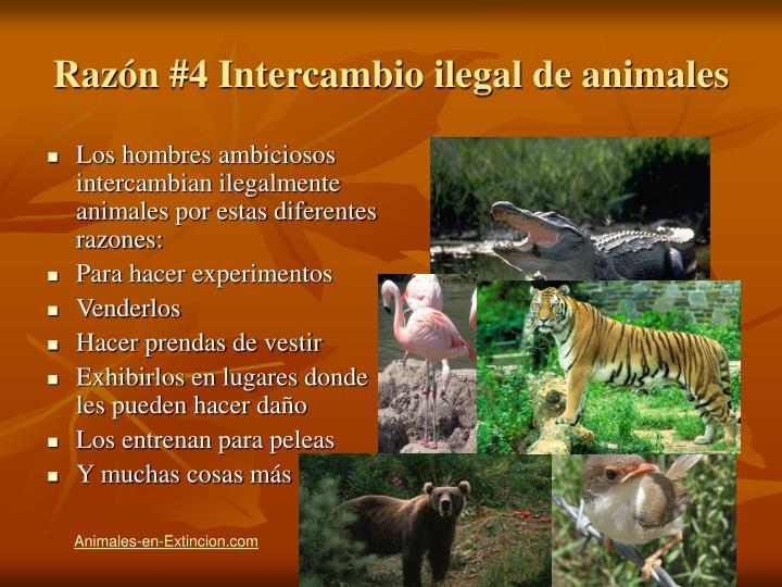 Razón #4 Intercambio ilegal de animales