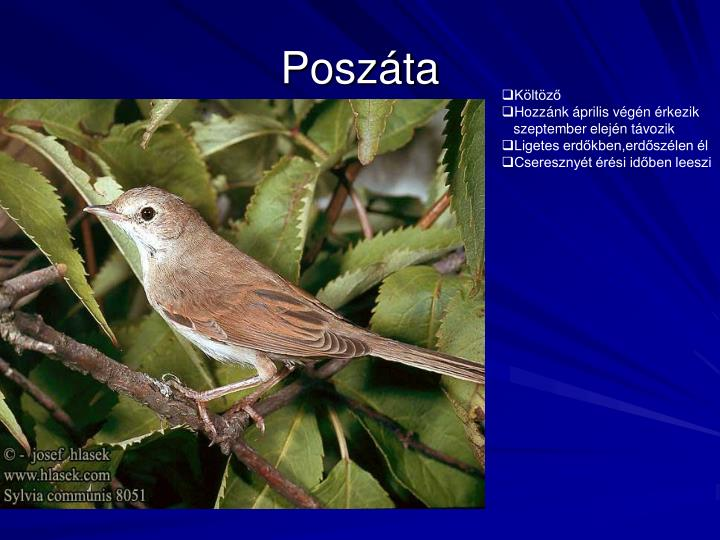 Poszáta