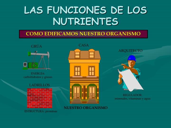 LAS FUNCIONES DE LOS NUTRIENTES