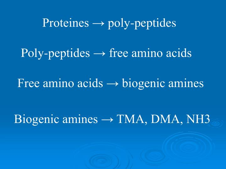 Proteines → poly-peptides