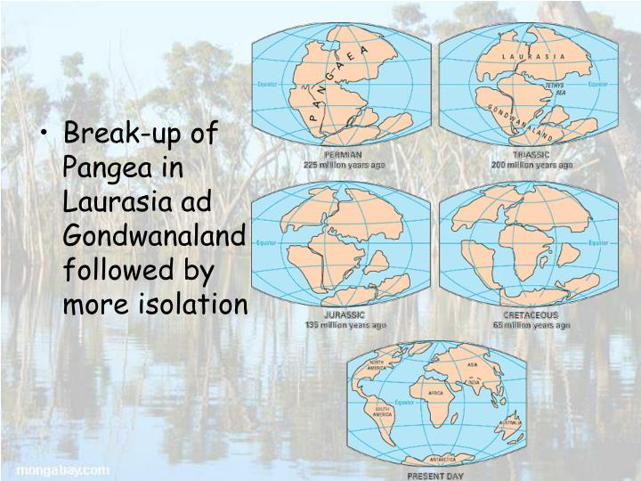 Break-up of Pangea in Laurasia ad Gondwanaland followed by more isolation