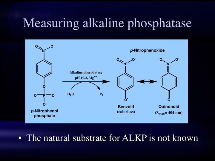 Measuring alkaline phosphatase