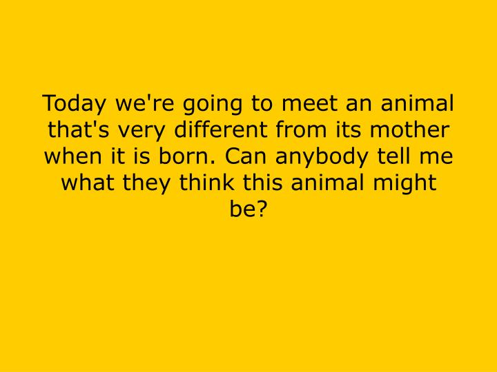 Today we're going to meet an animal that's very different from its mother when it is born. Can anybody tell me what they think this animal might be?