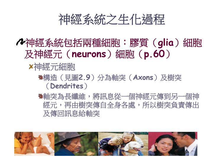 神經系統之生化過程