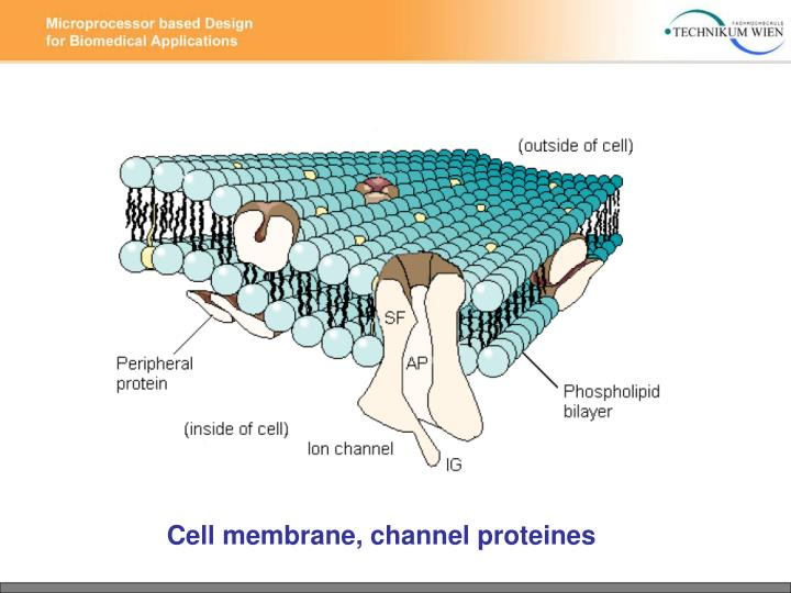 Cell membrane, channel proteines
