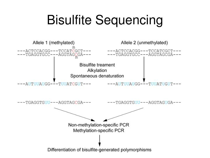 Bisulfite Sequencing