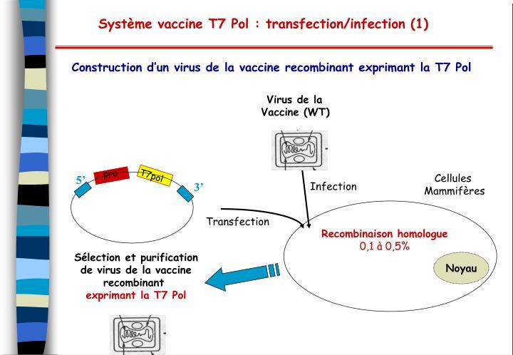 Virus de la