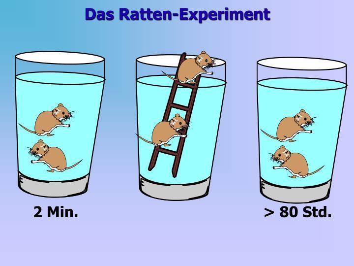 Das Ratten-Experiment