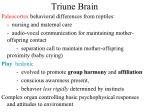 triune brain2