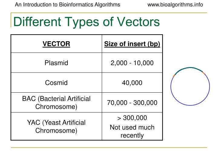 Different Types of Vectors