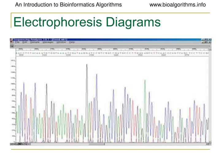 Electrophoresis Diagrams