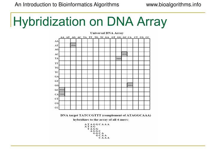 Hybridization on DNA Array
