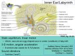 inner ear labyrinth