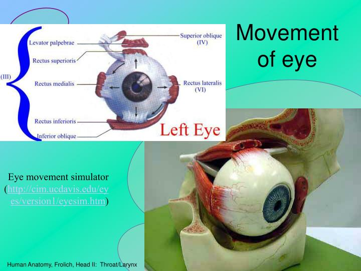 Movement of eye