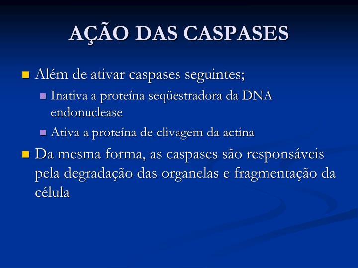 AÇÃO DAS CASPASES