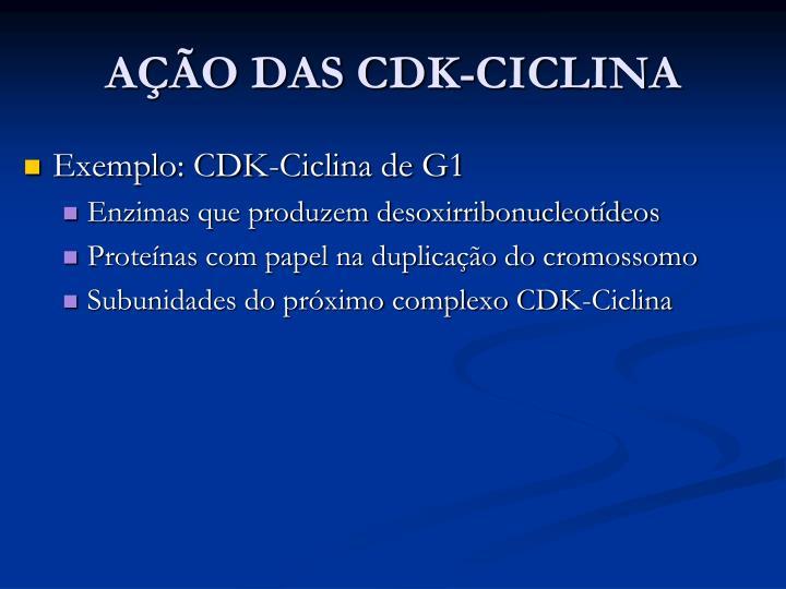 AÇÃO DAS CDK-CICLINA