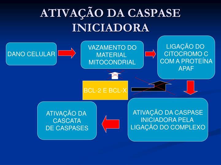ATIVAÇÃO DA CASPASE INICIADORA