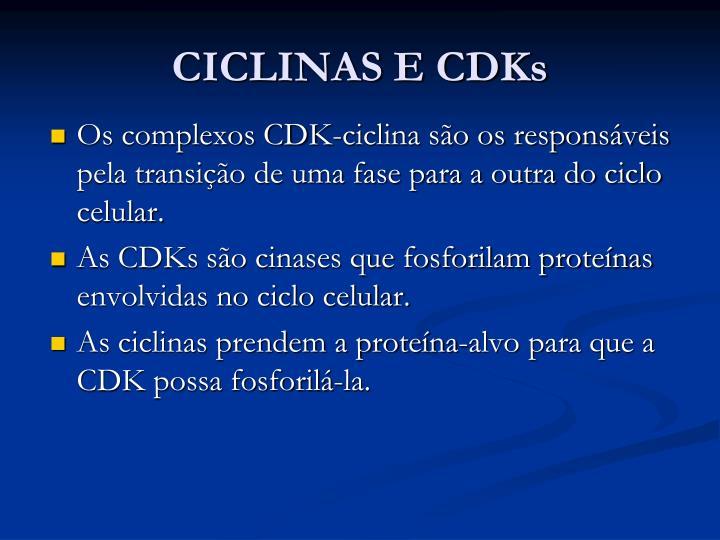 CICLINAS E CDKs