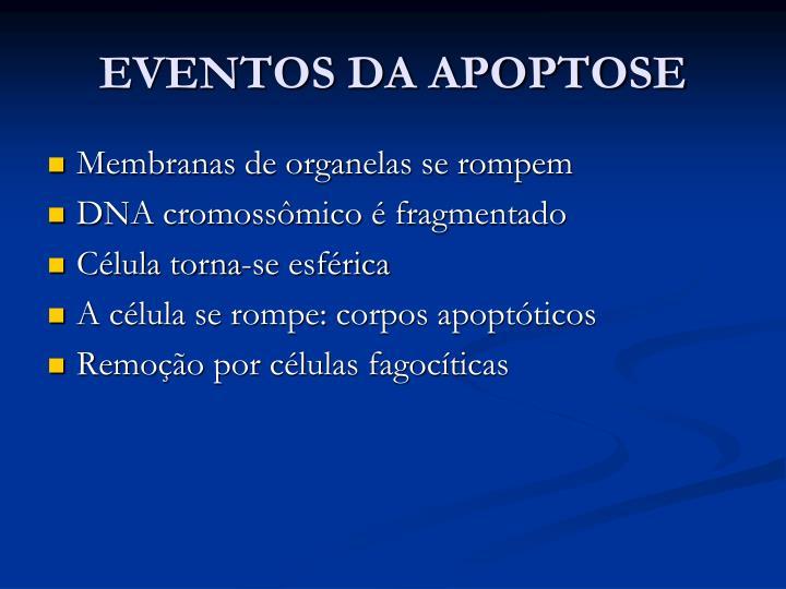 EVENTOS DA APOPTOSE