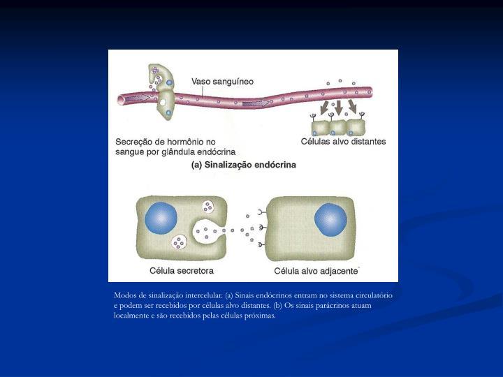 Modos de sinalização intercelular. (a) Sinais endócrinos entram no sistema circulatório e podem ser recebidos por células alvo distantes. (b) Os sinais parácrinos atuam localmente e são recebidos pelas células próximas.