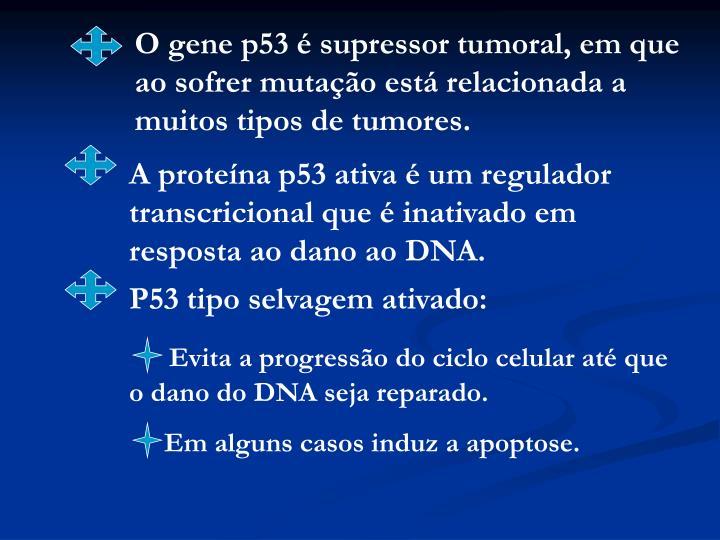 O gene p53 é supressor tumoral, em que ao sofrer mutação está relacionada a muitos tipos de tumores.