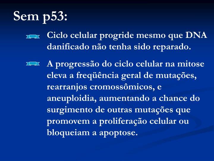 Sem p53: