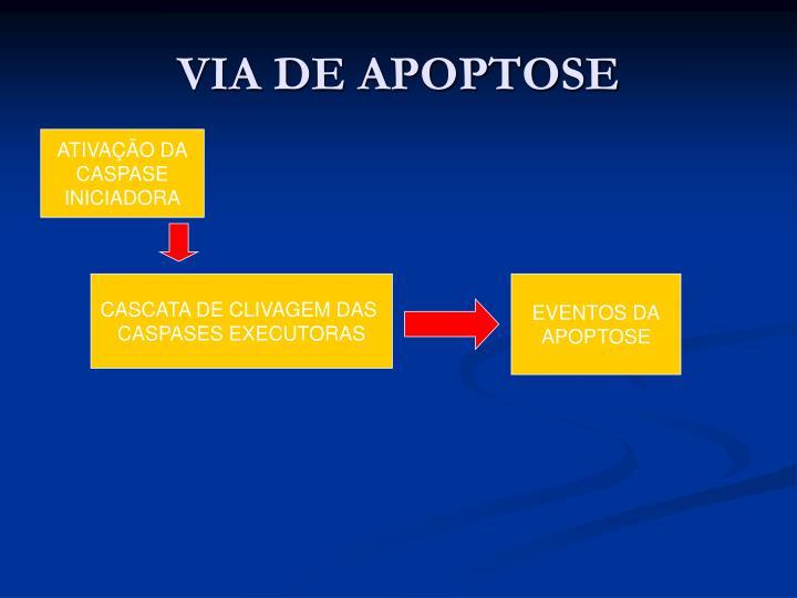 VIA DE APOPTOSE