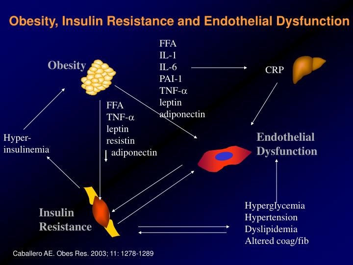 Obesity, Insulin Resistance and Endothelial Dysfunction