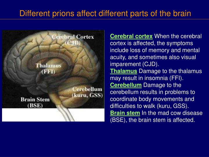 Different prions affect different parts of the brain