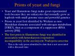 prions of yeast and fungi
